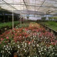 Viveros GardenPlant Las Palmas